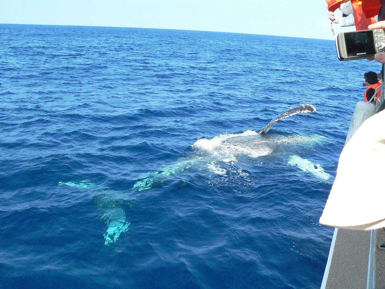ゲストとクジラ
