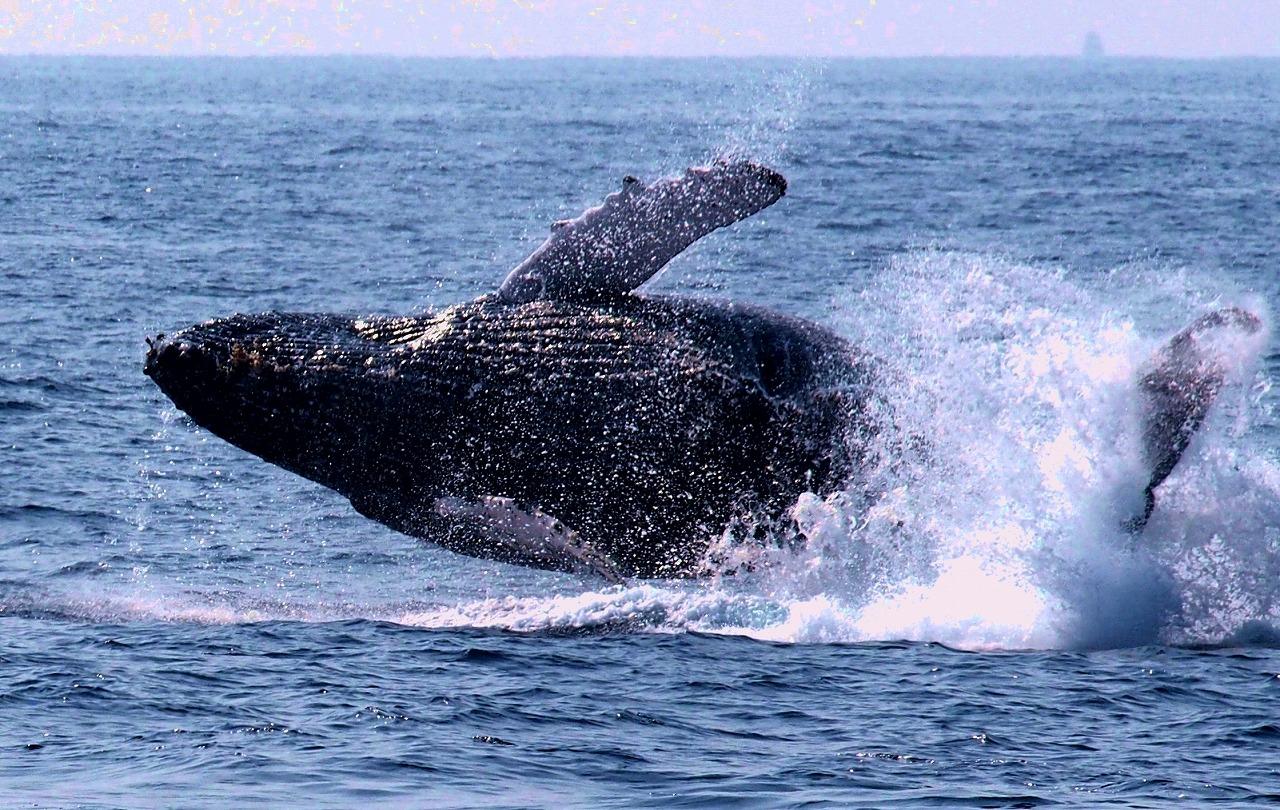 whale02x