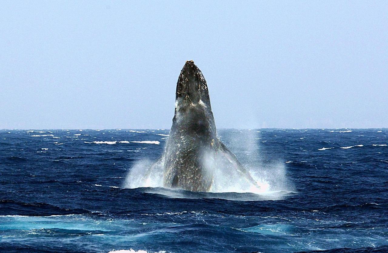 whale05x