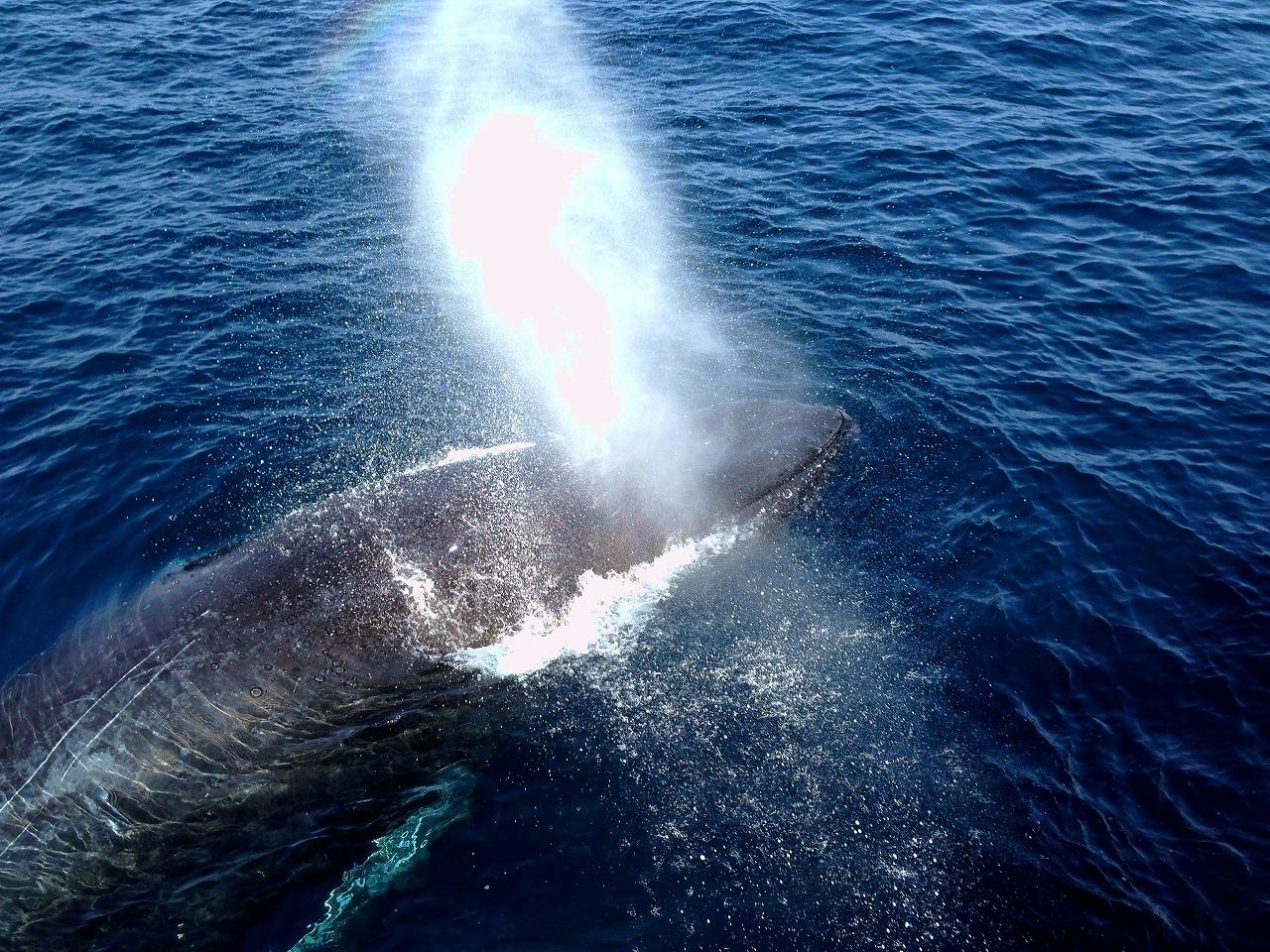 whale07x