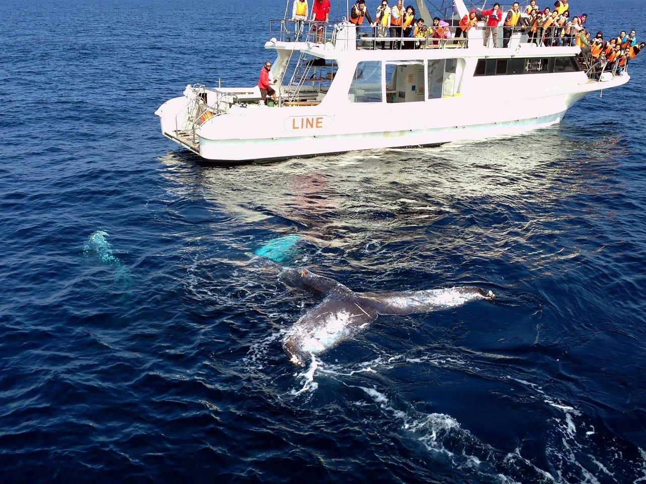 whale08x