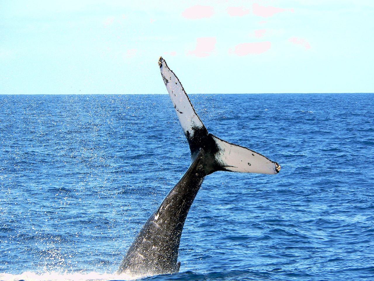 whale09x
