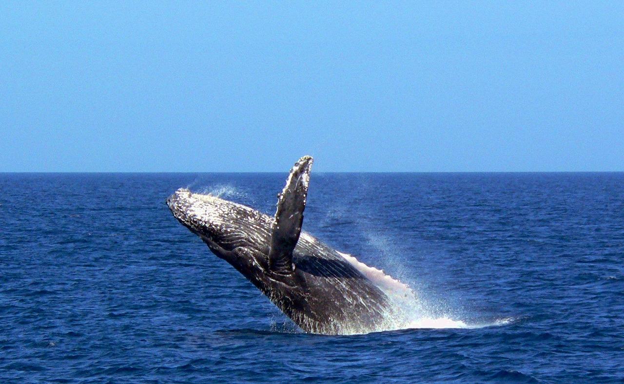 whale10x