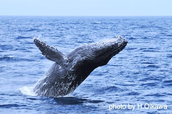 whale 2010 (3)