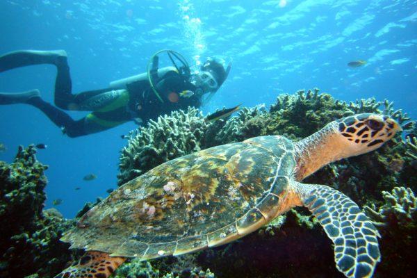 沖繩3大潛水景點攻略