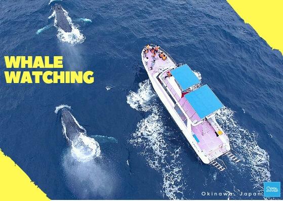 【沖繩賞鯨】2019沖繩賞鯨行程攻略,沖繩冬季限定必玩!